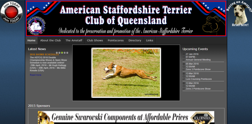 American Staffordshire Terrier Club of QLD